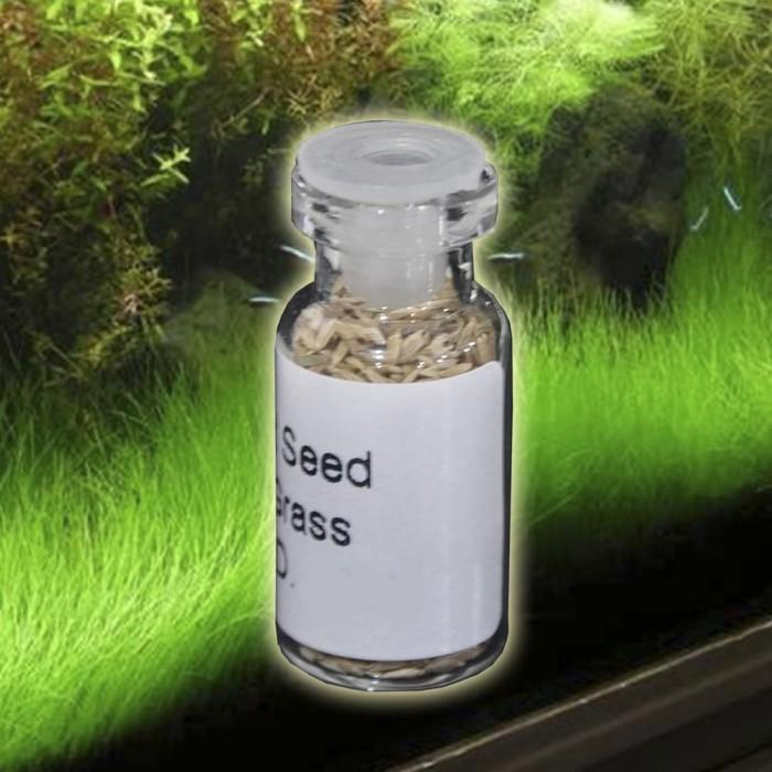 Bibit Mini Hair Grass Seed Dasar Akuarium Aquascape Kemasan 3 ml 12062