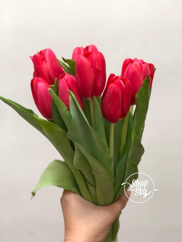 Jual Bunga Tulip Segar Dan Asli Bunga Potong Kualitas Tinggi