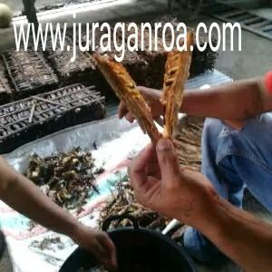 Foto Produk ikan roa kupas badan + kepala dari juraganroa