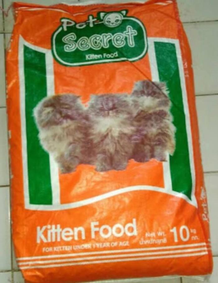 Hasil gambar untuk pet secret kitten