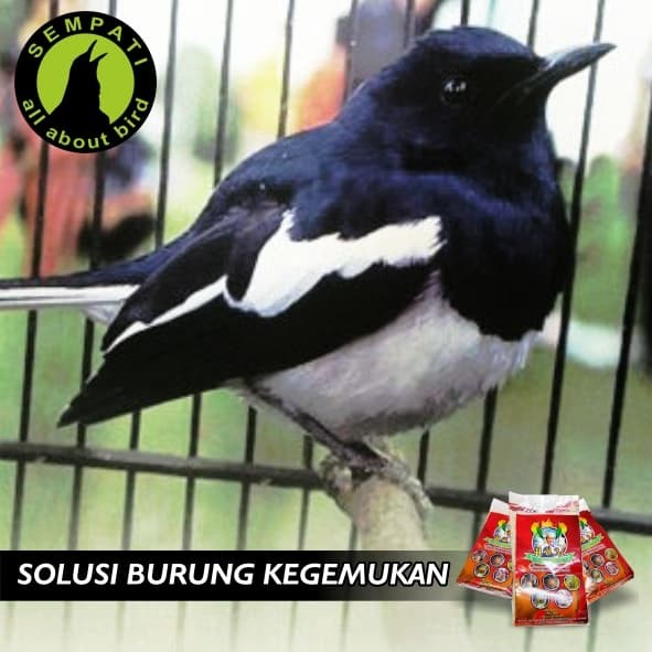 ... Bogena Egg Food with Fruits Pakan Burung Lovebird & Kenari Source