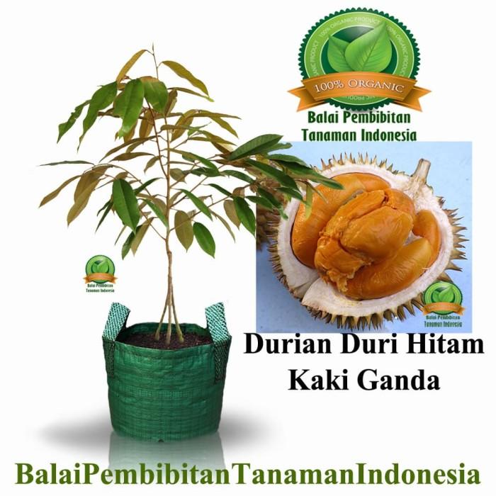 harga Bibit durian duri hitam kaki 3 / bibit buah / tanaman Tokopedia.com