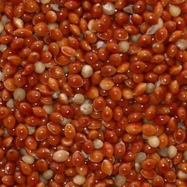 Foto Produk Milet merah kiloan ( red millet ) dari SPD JAYA
