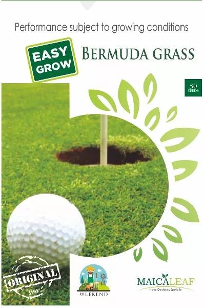 50 Benih RUMPUT BOLA / GOLF (BERMUDA GRASS) Maica Leaf