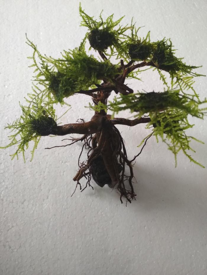 Jual Kayu Bonsai Aquascape Size M Moss - Kota Depok ...