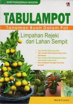 harga Tabulampot tanaman buah dalam pot - by muktiani Tokopedia.com
