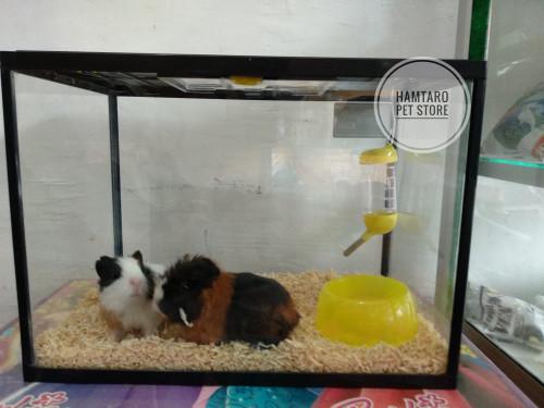 harga Kandang marmut / guinea pig simple bisa buat kandang hamster dan ikan Tokopedia.com