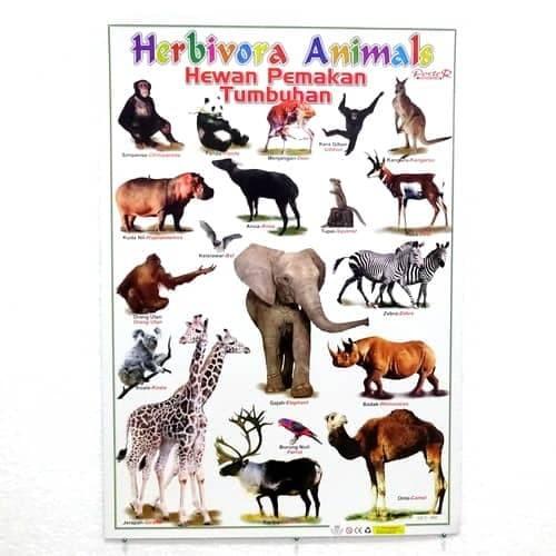 470 Koleksi Gambar Sketsa Hewan Herbivora Gratis Terbaru