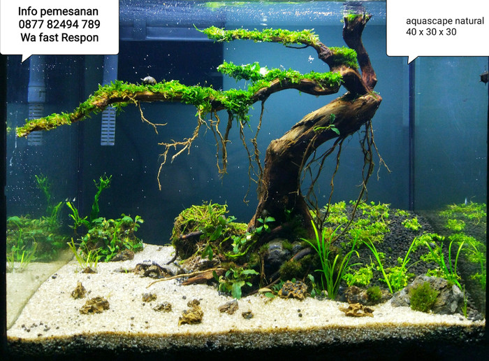 Jual Jasa Setting Design Dekor Aquarium Aquascape Natural ...