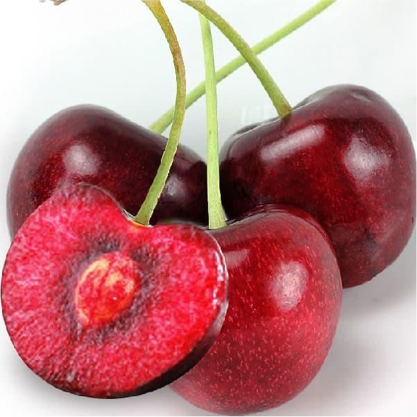 Foto Produk Biji Benih Bibit Buah Red Sweet Cherry Prunus cerasus dari Biji Benih