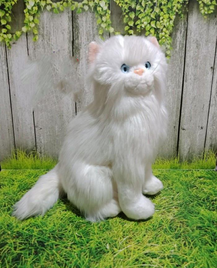 420 Koleksi Gambar Binatang Kucing Anggora HD Terbaik