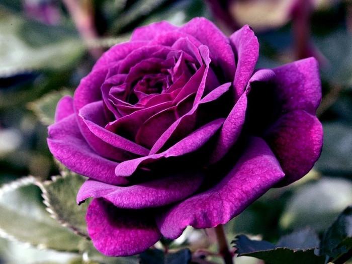 Unduh 41 Gambar Bunga Cantik Warna Ungu Paling Cantik