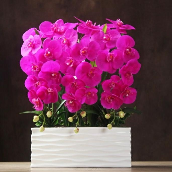 Jual Rangkaian Besar Bunga Anggrek Latex Import(T.60cm 4ffa08f369