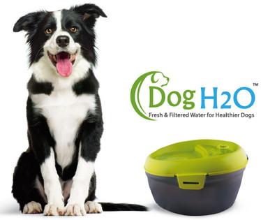 harga Dog h2o pet water fountain feeder tempat minum anjing hewan dispenser Tokopedia.com