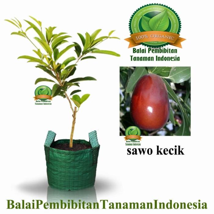 harga Bibit / bibit buah / tanaman Tokopedia.com