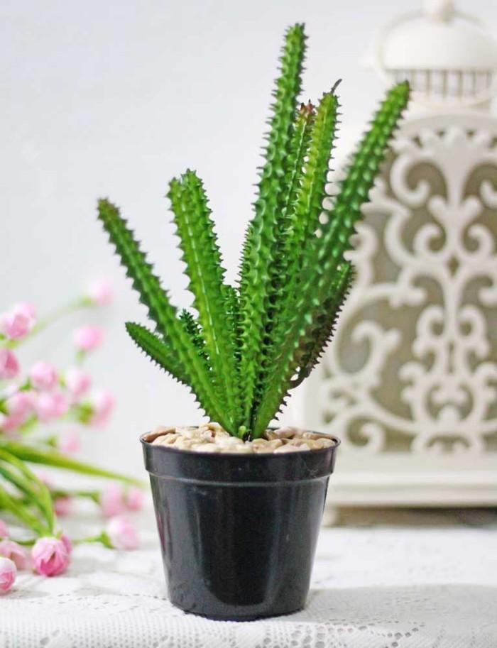 harga Pajangan kaktus cactus artificial + pot plastik shabby chic a1-1 Tokopedia.com