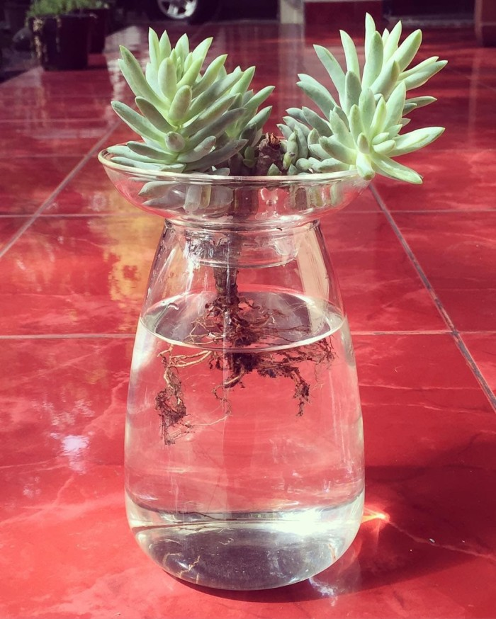 Jual Vas Aqua Cultur Vase L Basket Gelas Tanaman Hidroponik Interior Kota Surabaya Suji Surabaya Tokopedia