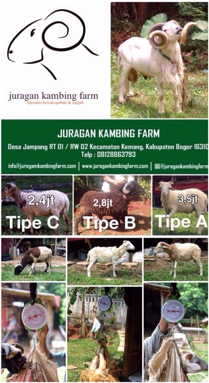 Jual Tabungan Qurban Jakarta Pusat JKF