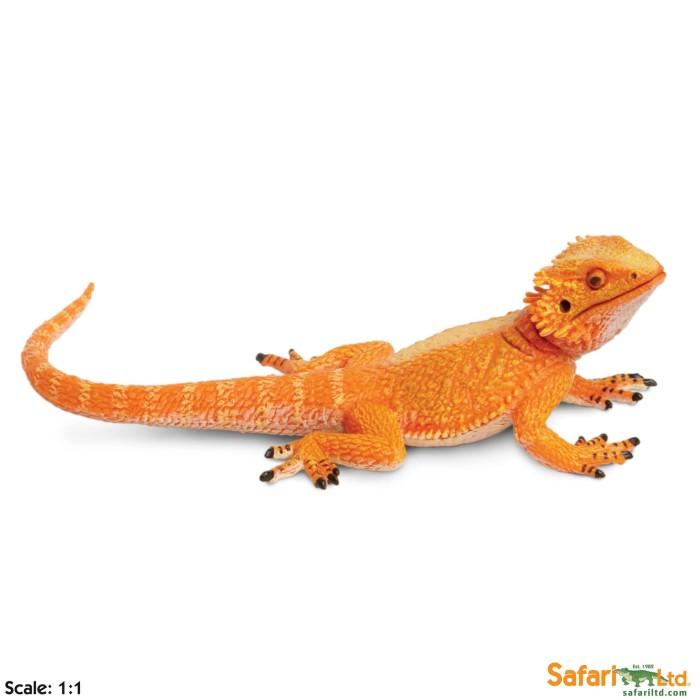 harga Safari ltd. - bearded dragon Tokopedia.com