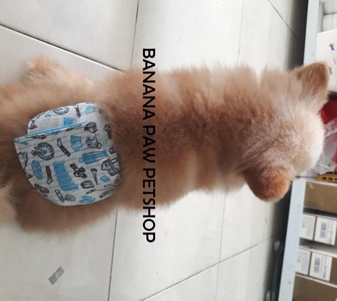 harga Belly band belt male diaper diapers / popok untuk anjing jantan size s Tokopedia.com