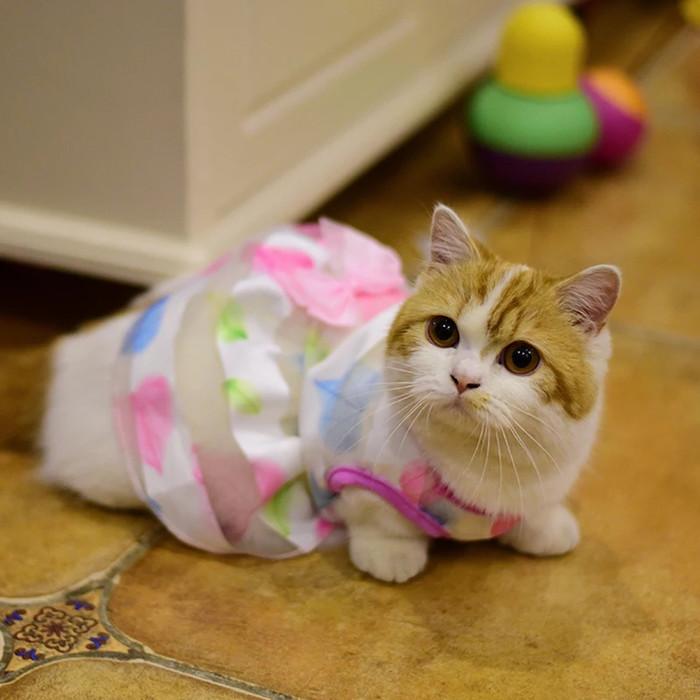 harga Baju kucing baju anjing dress betina Tokopedia.com
