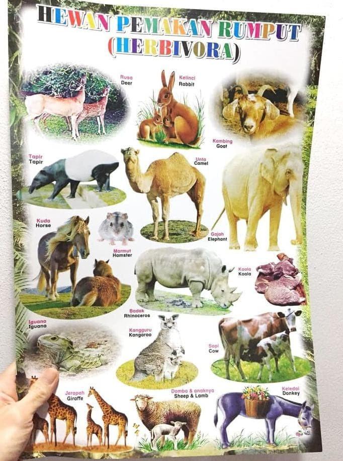 640 Gambar Binatang Pemakan Rumput Terbaru