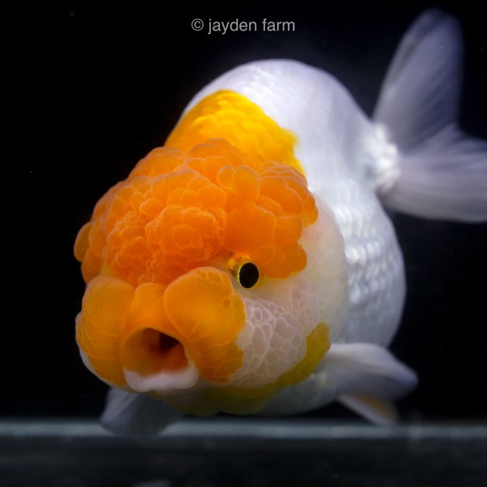 1010+ Gambar Ukiran Ikan Dari Sabun Mandi HD Terbaik