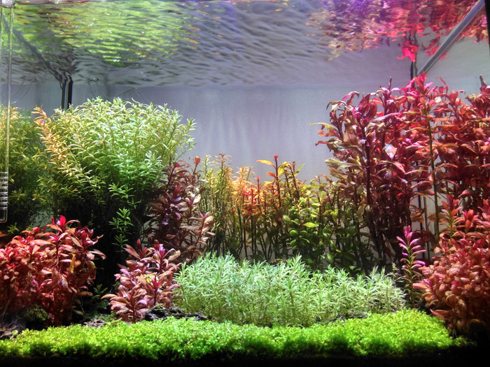 Aquascape Ideas Dutch Style Aquascape