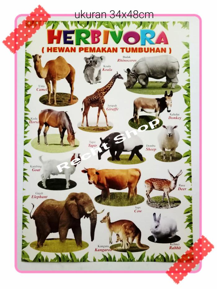 45 Koleksi Sketsa Gambar Hewan Herbivora Terbaik