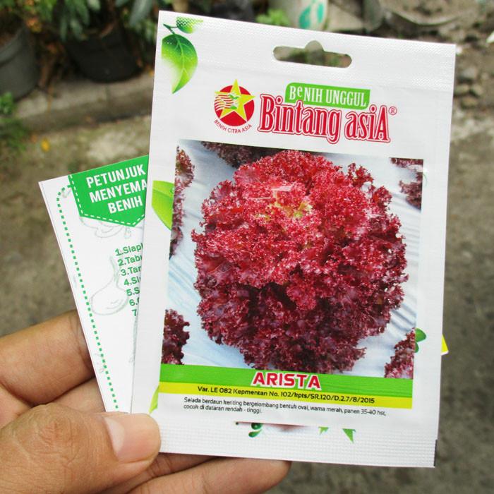 Foto Produk Selada Merah Lollo Rossa Arista Bintang Asia dari mewalik-jaya