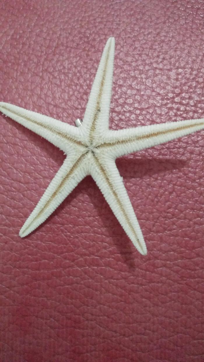 Jual Bros Bintang Laut Asli Putih Kota Depok Casval Shop