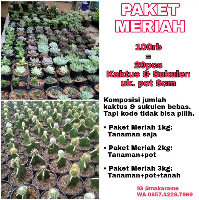 Review Kaktus Sukulen Grosir Murah. Paket Meriah 3  20pcs Tanaman+ ... a11cf568c9
