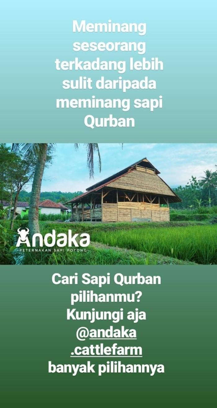 Jual Sapi Qurban Kab Sumedang D SHOP2015