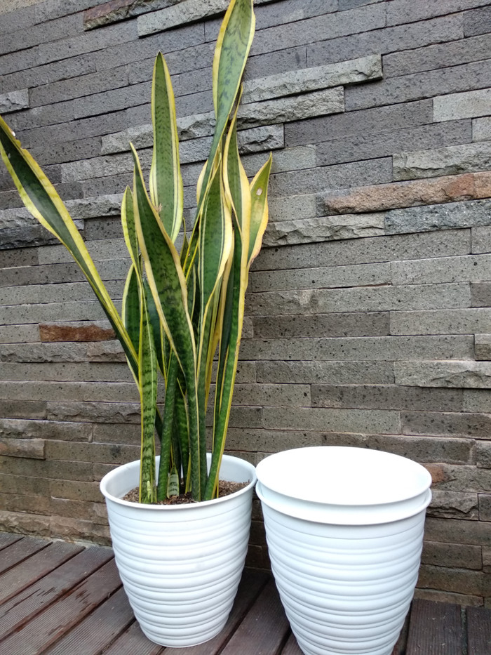 harga Pot tawon putih pirus 27 cm / pot tawon model lebih panjang Tokopedia.com