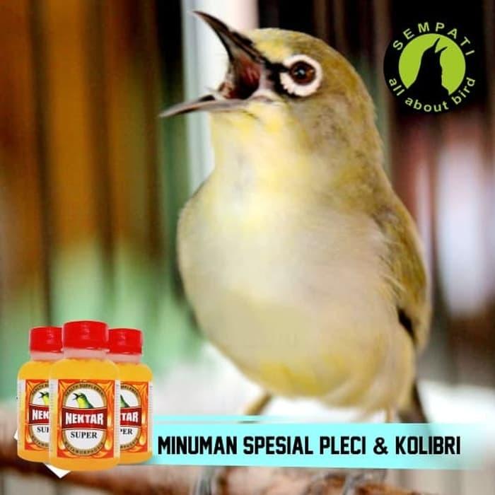 Info Suara Burung Gacor DaftarHarga.Pw