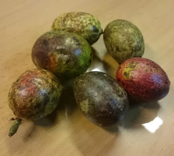 harga Buah matoa asli papua rasa unik kelengkeng rambutan durian 1kg murah Tokopedia.com