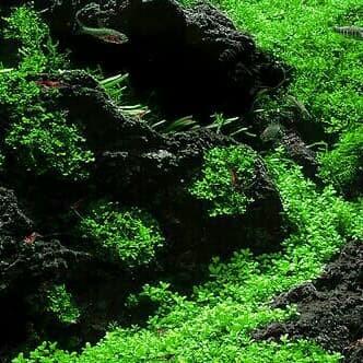 Jual Batu lava rock / lava rough Aquascape Aquarium - Kab ...