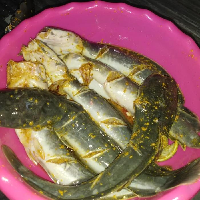 Jual Ikan Lele Bumbu Siap Digoreng Kota Tangerang Andes Okeshop Tokopedia