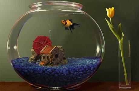 Jual Aquarium Bulat Toples 2 Liter Kota Yogyakarta Taro Pet Shop Tokopedia