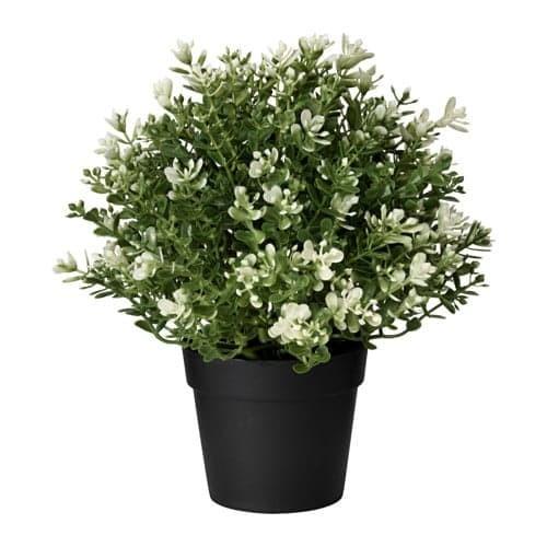 Jual IKEA FEJKA tanaman tiruan dalam pot 6bdb79a932