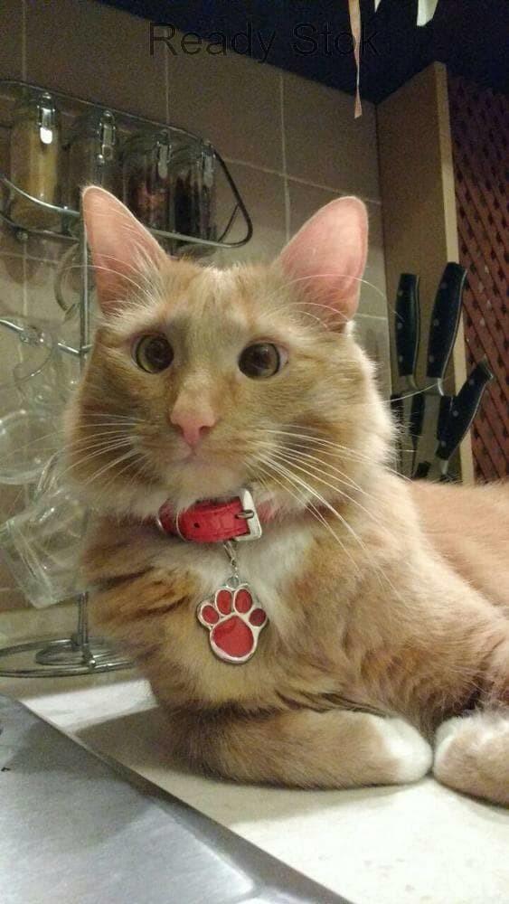 Aksesoris Hewan kalung collar anjing dan kucing