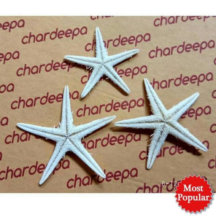 bondarts Bintang Laut Natural Kecil Starfish