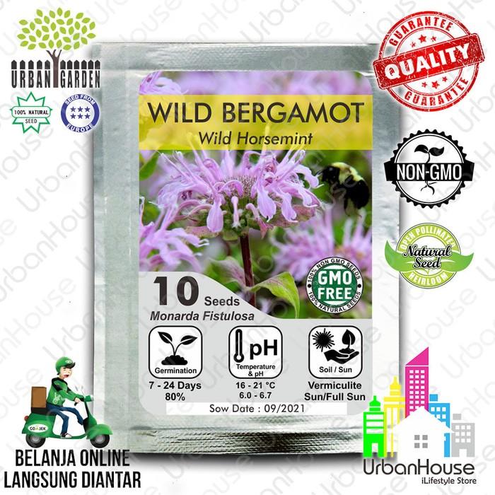 HERBS - Benih WILD BERGAMOT IMPORT Bibit Bunga Tanaman Bergamot Mint