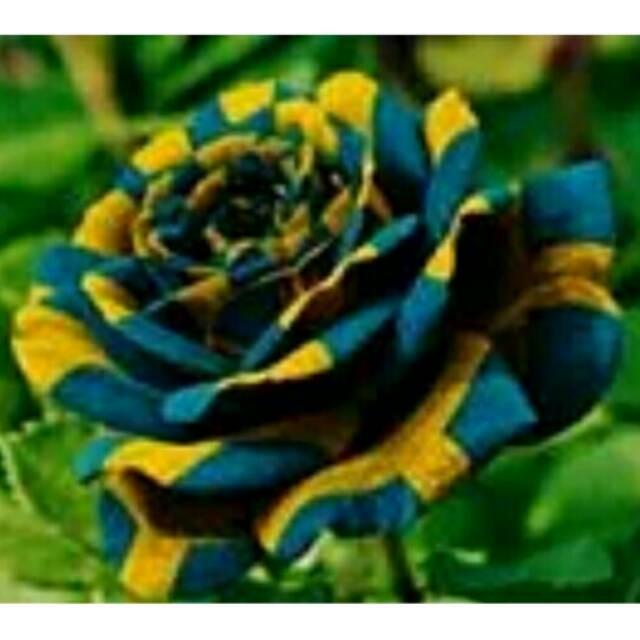 101+ Gambar Bunga Langka Paling Keren