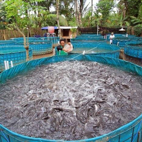 Jual Terpal Kolam ikan,lele,gurami,nila,udang lobster - Kota ...