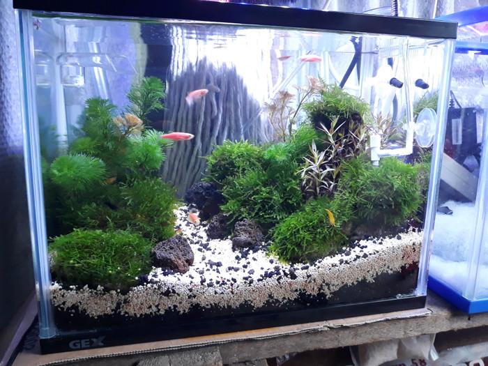 Jual Aquascape Dutch Style Mini Jakarta Pusat Aqua J Scaper Tokopedia