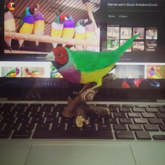 Jual Burung Finch Hiasan Replica Kota Malang Wardoyo Galery Tokopedia