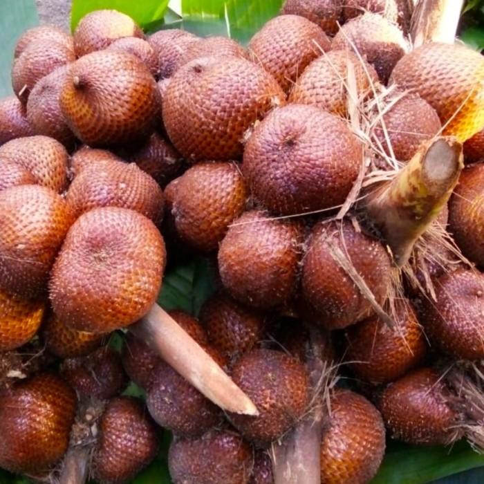 Foto Produk Buah Salak bali madu gula pasir manis /ONS /100GRAM dari AsanBuahFreshFruit