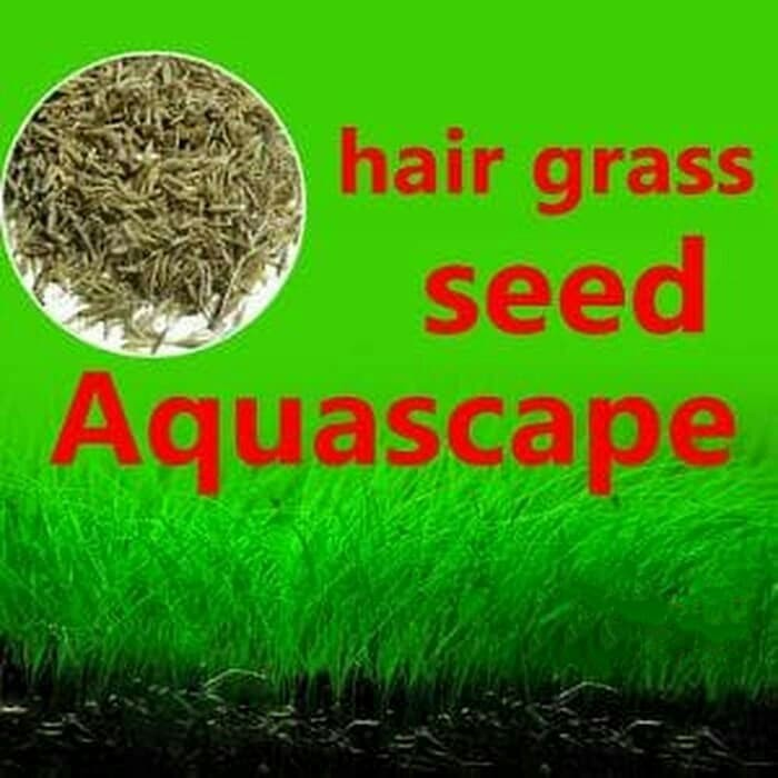 Jual Bibit Benih Tanaman Carpet Seed Aquascape Hair Grass Hairgrass Kab Bekasi Dunia Grosir Sp Tokopedia