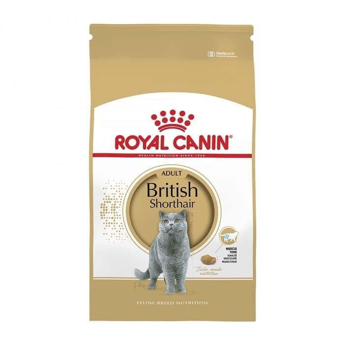 Katalog Kucing British Shorthair Travelbon.com